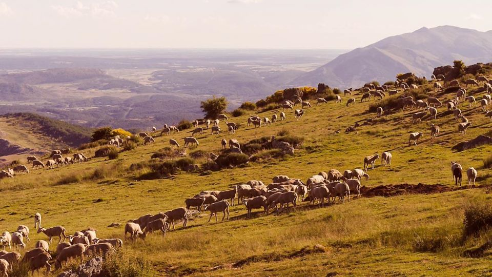 The Ovinnova Project Begins To Convert Transhumance And Grazing Into A Viable And Sustainable Business Model