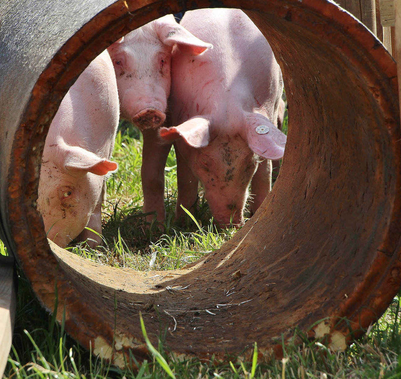 Strong Increase In The Export Of Pork At The End Of The Year, According To The EU