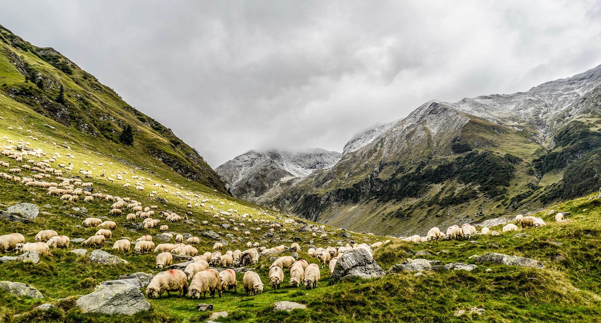 240 Cantabrian Farmers Will Distribute 75,000 Euros In Aid To Sheep And Goats