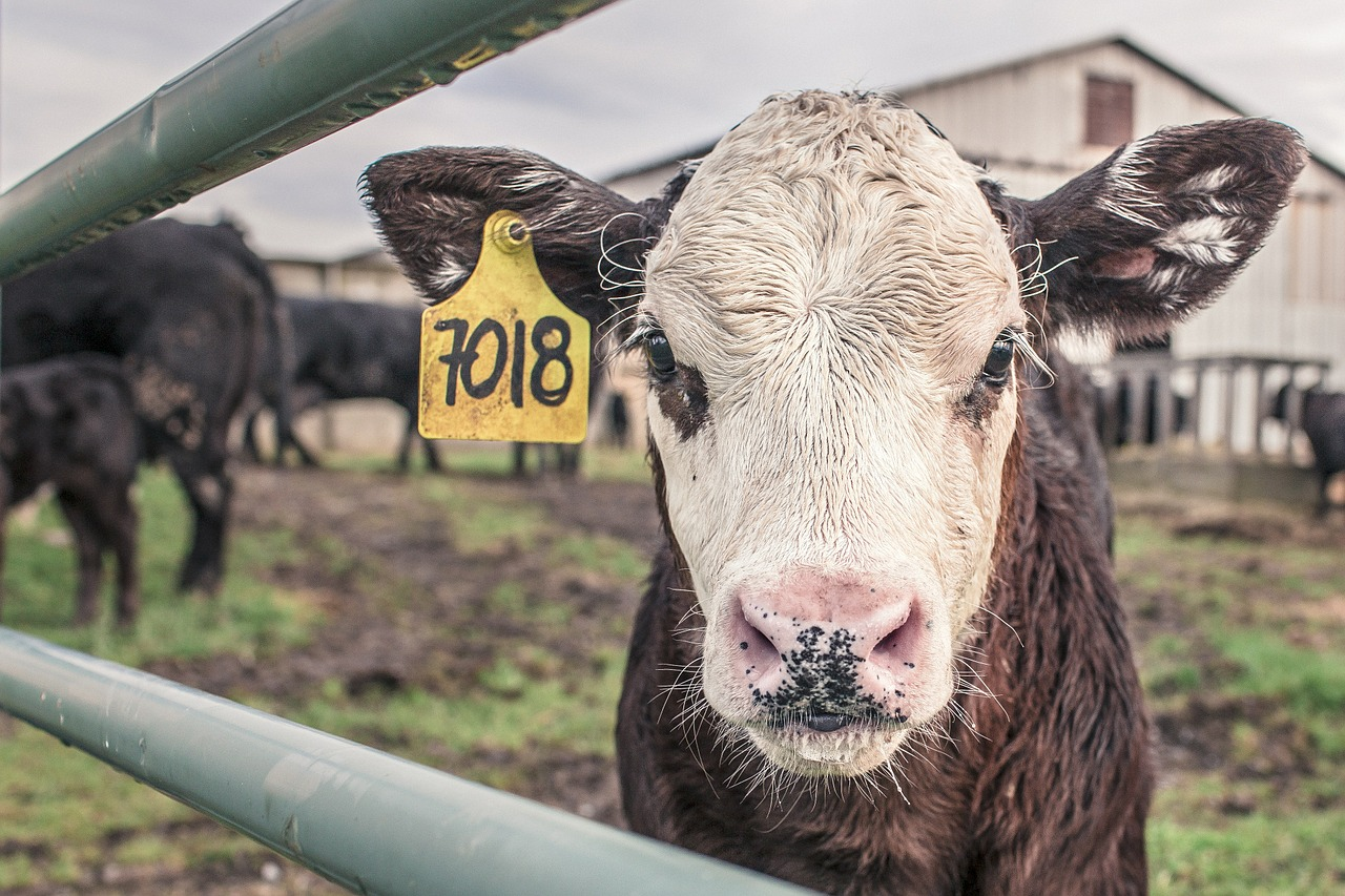 The World Meat Market Will Grow In 2021 According To Rabobank