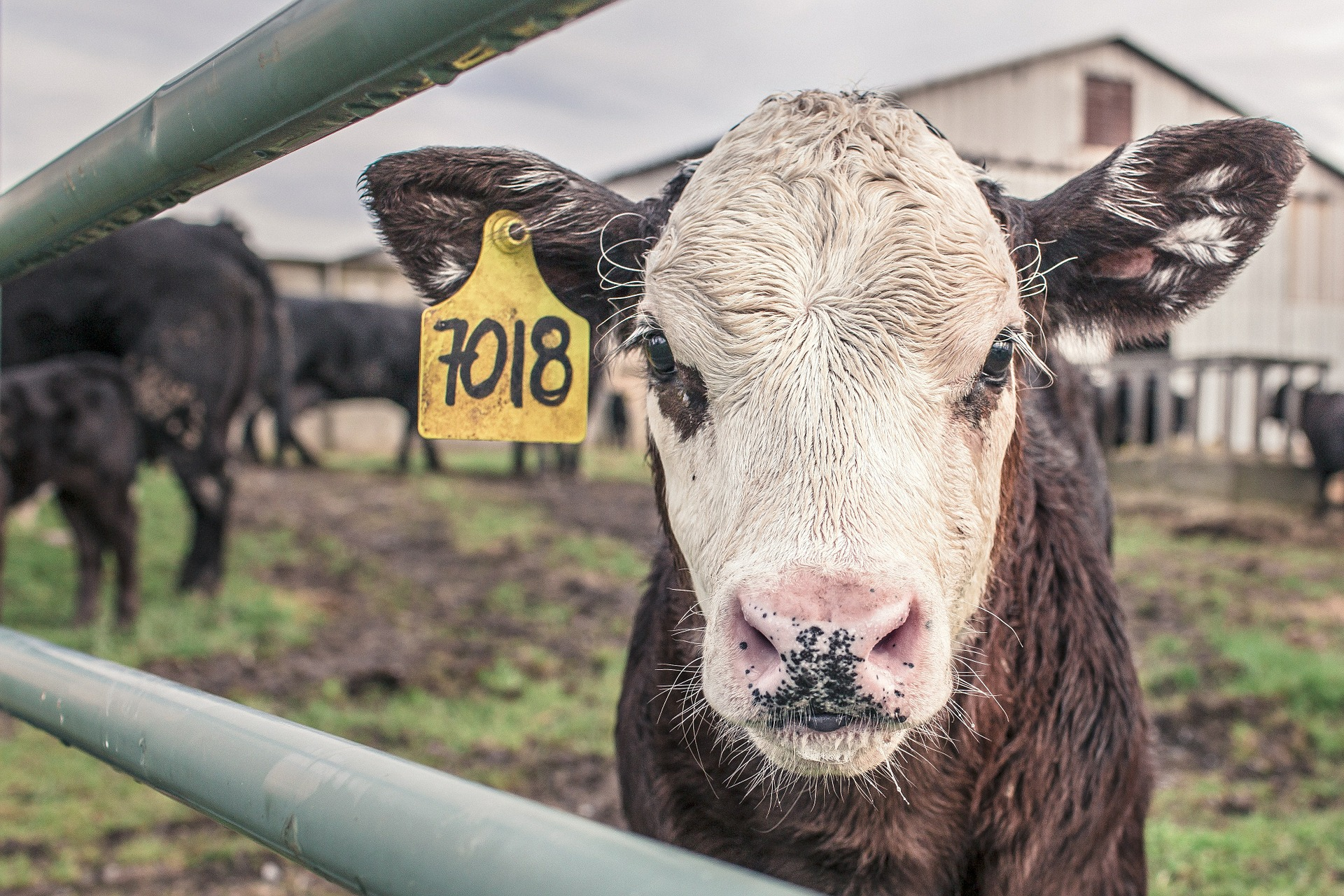 Farm 'animal Health Visits' Will Start Before April