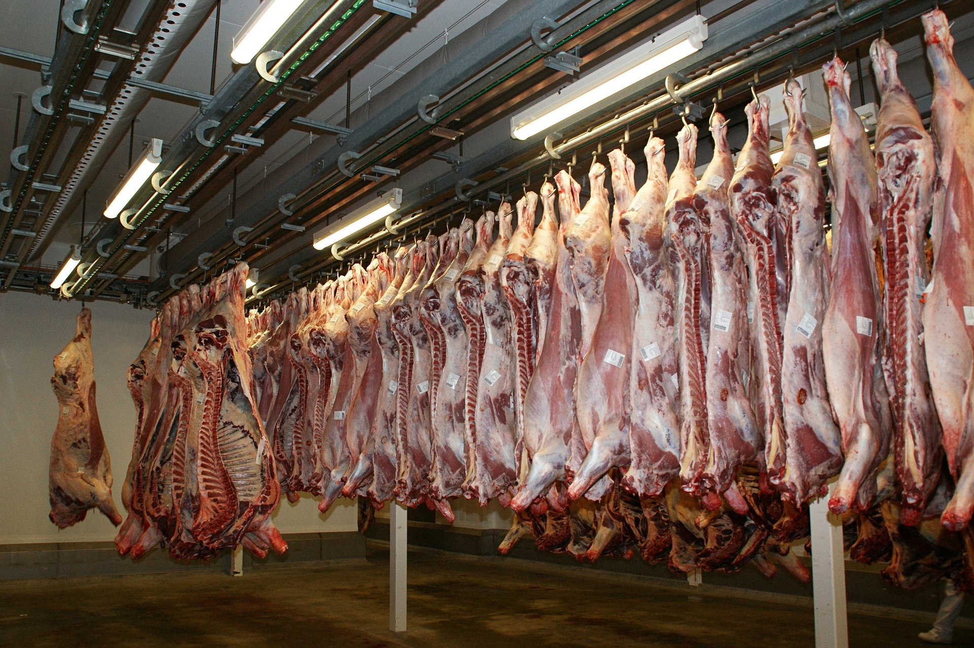 Madrid Monitors 27 Million Animals In Slaughterhouses Per Year
